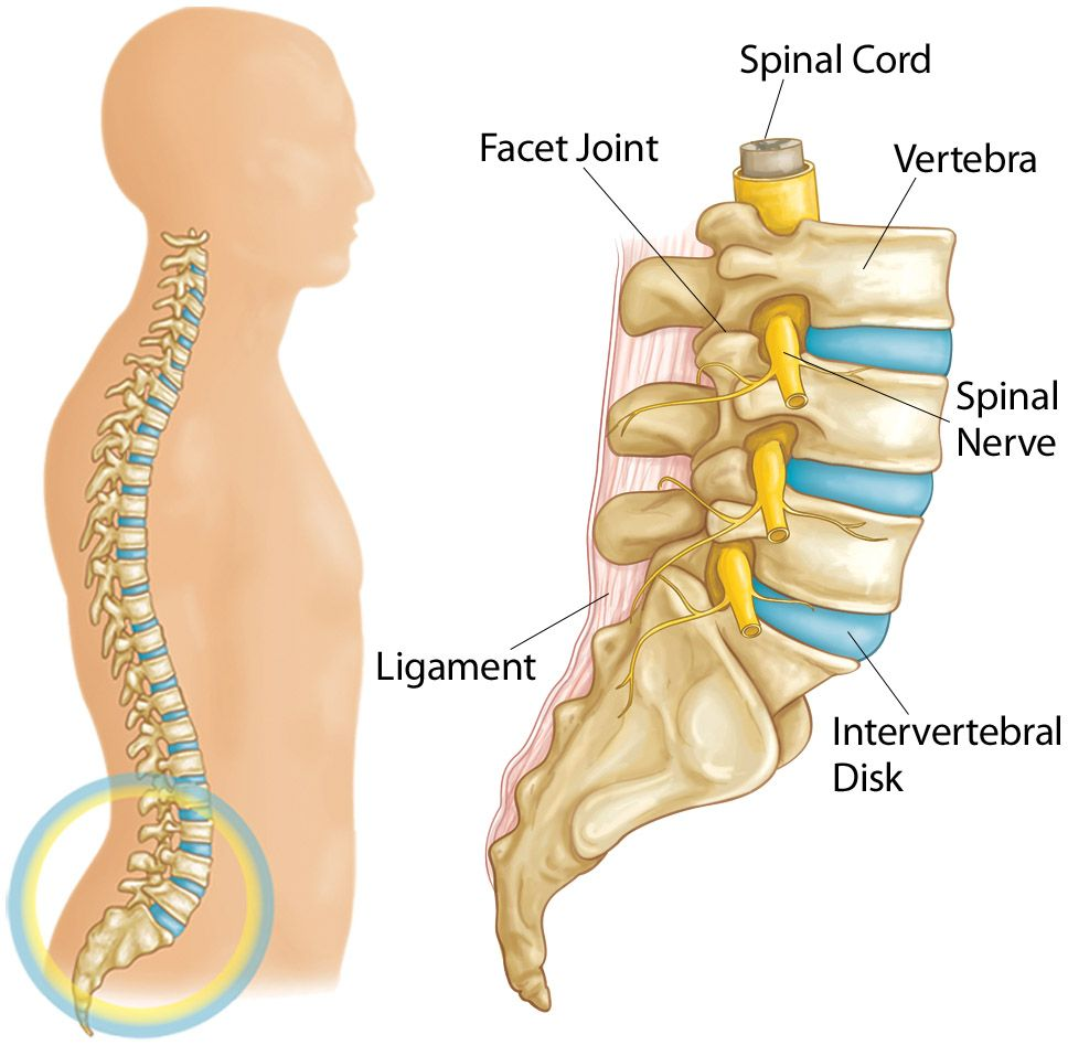 Discal Ligament