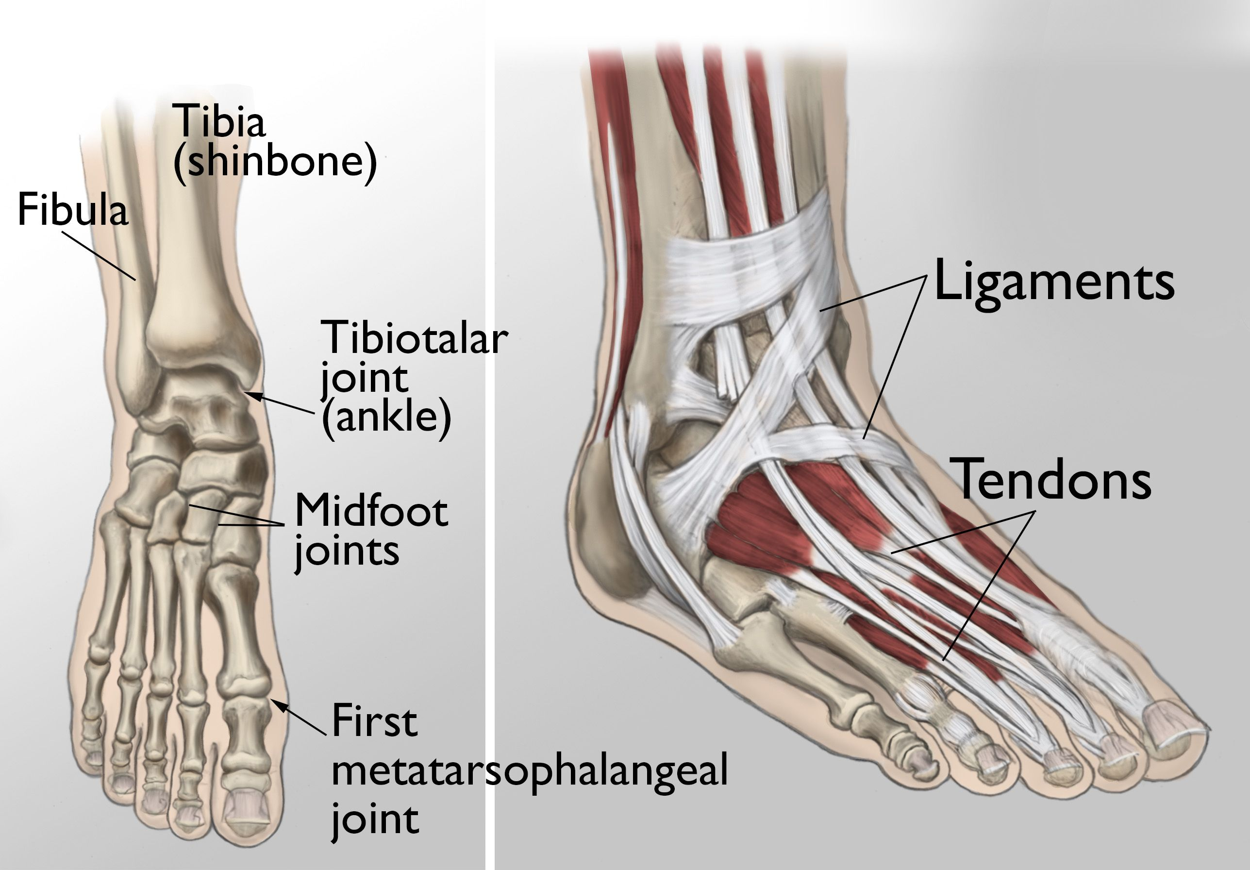 Arthritis Of The Foot And Ankle Orthoinfo Aaos