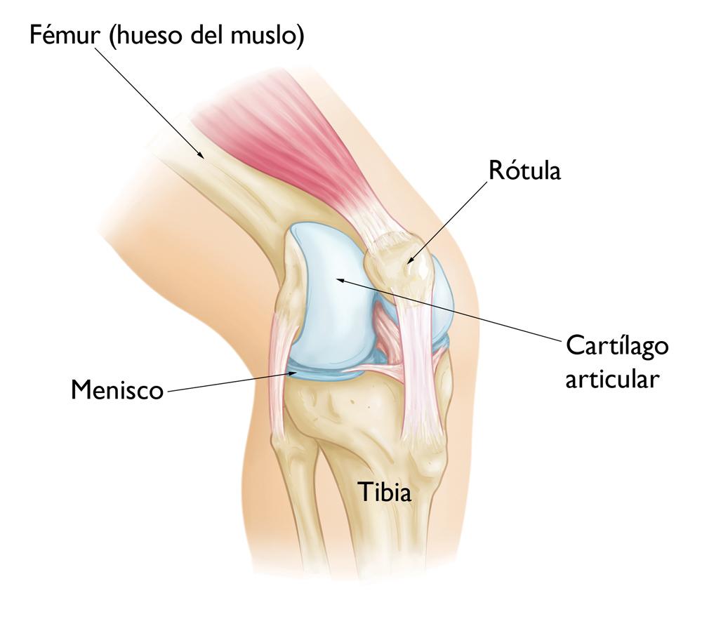 Dolor de rodilla anterior en adolescentes (Adolescent Anterior Knee ...