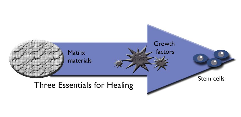 The relationship between matrix, growth factors, and stem cells