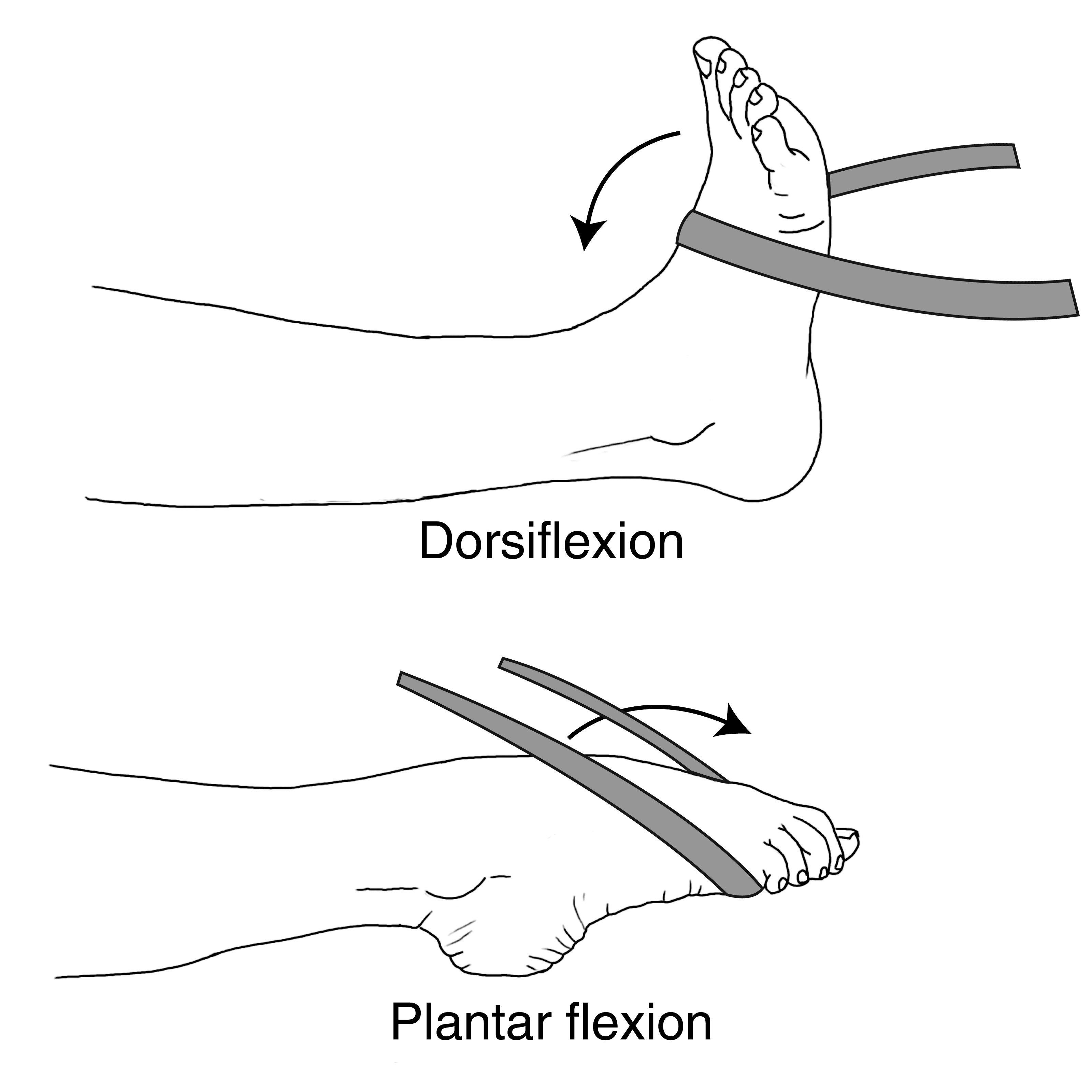 Ankle dorsiflexion/plantar flexion