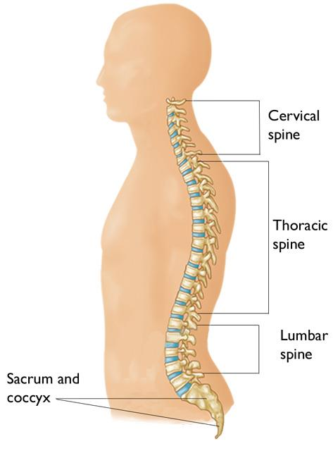 Cervical Radiculopathy Pinched Nerve Orthoinfo Aaos