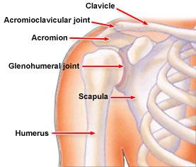Shoulder Trauma (Fractures and Dislocations) - OrthoInfo - AAOS