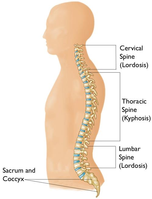 Kyphosis Roundback Of The Spine Orthoinfo Aaos