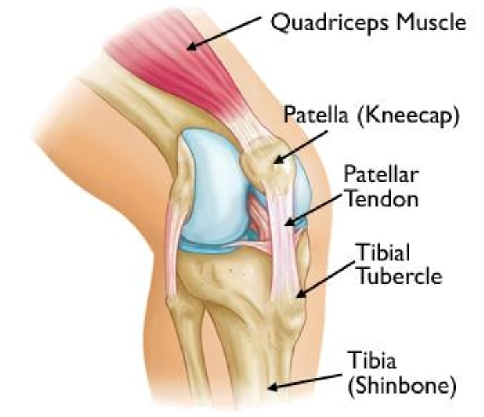Osgood-Schlatter knee anatomy
