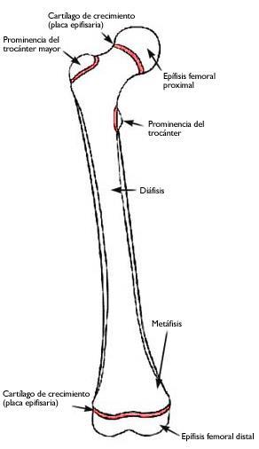 Fracturas del cartílago de crecimiento (Growth Plate Fractures ...