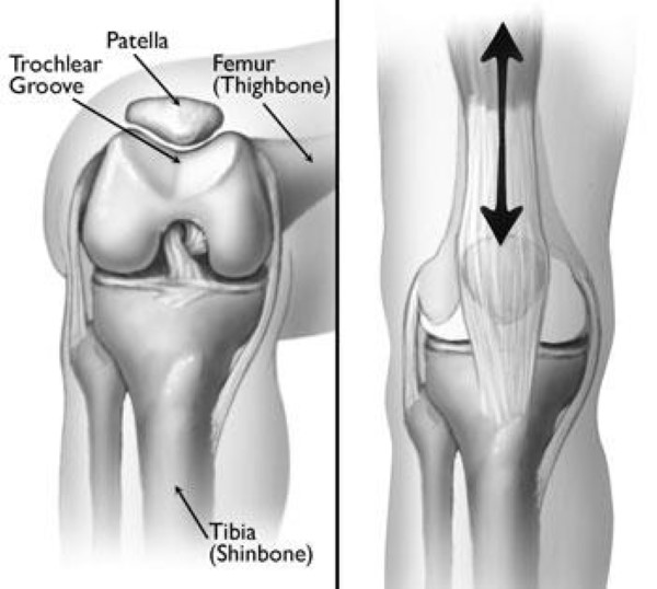 Knee Dislocation And Instability In Children Orthoinfo Aaos