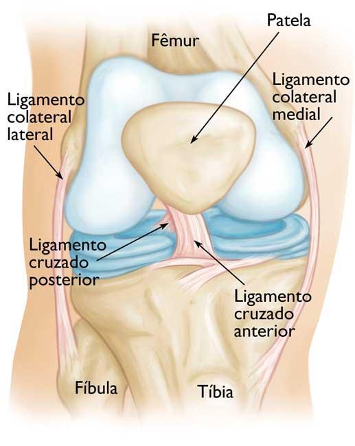 Lesões do ligamento cruzado anterior (LCA) (Anterior Cruciate ...