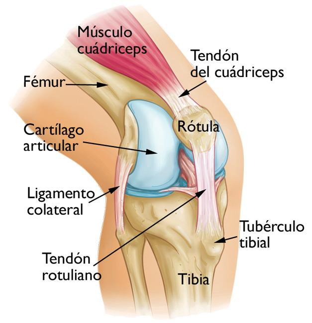 El síndrome de dolor patelofemoral (Patellofemoral Pain Syndrome ...